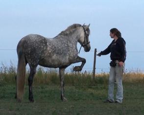 styrt på hest